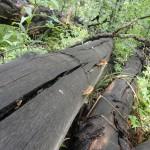 log shrooms