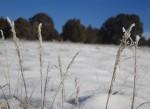 grass-frost-3