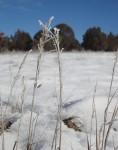 grass-frost