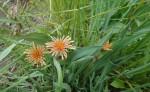 11-wild-flower-5