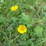 12-wild-flower-6