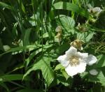14-wild-flower-2