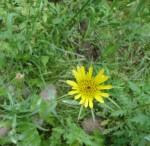 15-wild-flower-1