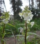 16-wild-flower-8